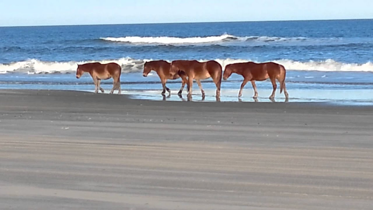 Wild Horses On Swan Beach In Corolla Nc