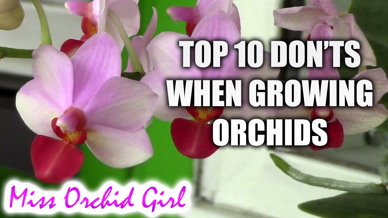 Top 10 Donts When Growing Orchids Tips For Orchid Beginners Youtube
