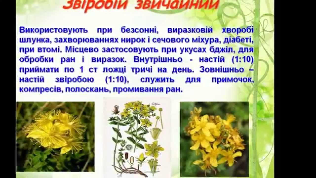 реферат на тему растения паразиты 6 класс