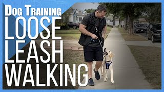 How to Teach ANY DOG to NOT PULL on Leash!