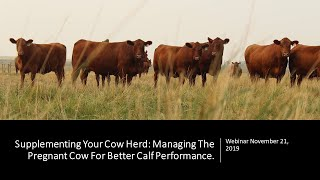 Supplementing Your Cow Herd: Managing The Pregnant Cow For Better Calf Performance Webinar