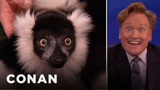 Animal Expert David Mizejewski: Lemur & Ostrich 01/08/14