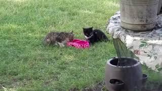 My Backyard Pets: Kittens Mystic & Dippin' Dots Eat