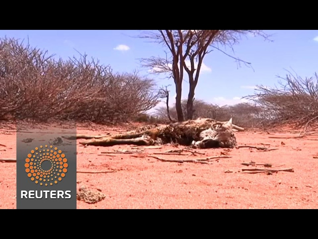 Surviving on black tea in drought stricken Somaliland