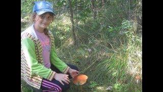 Какие грибы вырастают после грозы. Собираем грибы после ночного ливня.