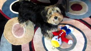 Mr. Bill is a great dog toy.