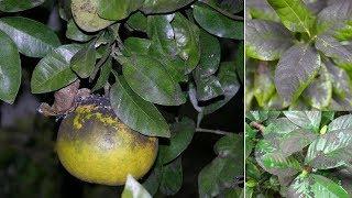 Dicas para Eliminar a Coloração Escura em Plantas