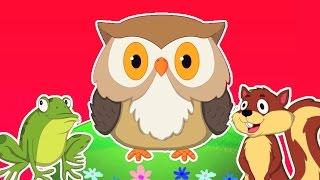 som de animais música | rimas de berçário das crianças | aprender animais
