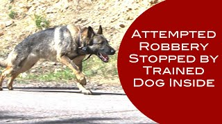 German Shepherd Stops Attempted Robbery In Colorado