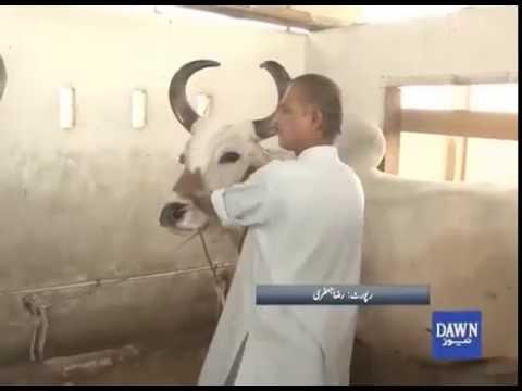 Chand Bell in Karachi