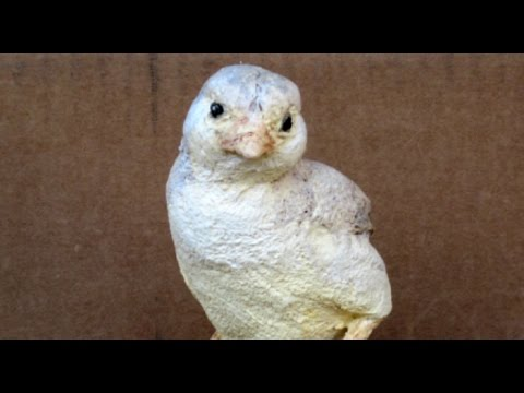 Make a Baby Chick with Paper Mache Clay