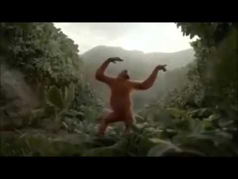 Hoch die Hände Wochenende Affen Style