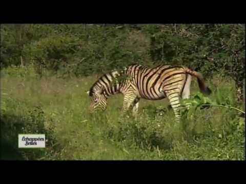 Discover South Africa film afrique du sud
