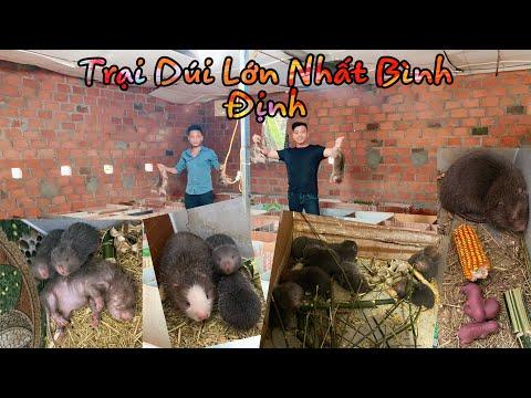 Ghé Thăm Trại Dúi Bình Định Cùng Chụy Hiếu Vlog