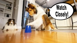 25  Amazing (and FUN) Tricks to teach your DOG