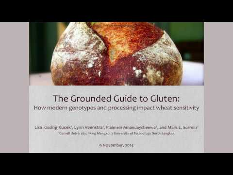 The Grounded Guide to Gluten