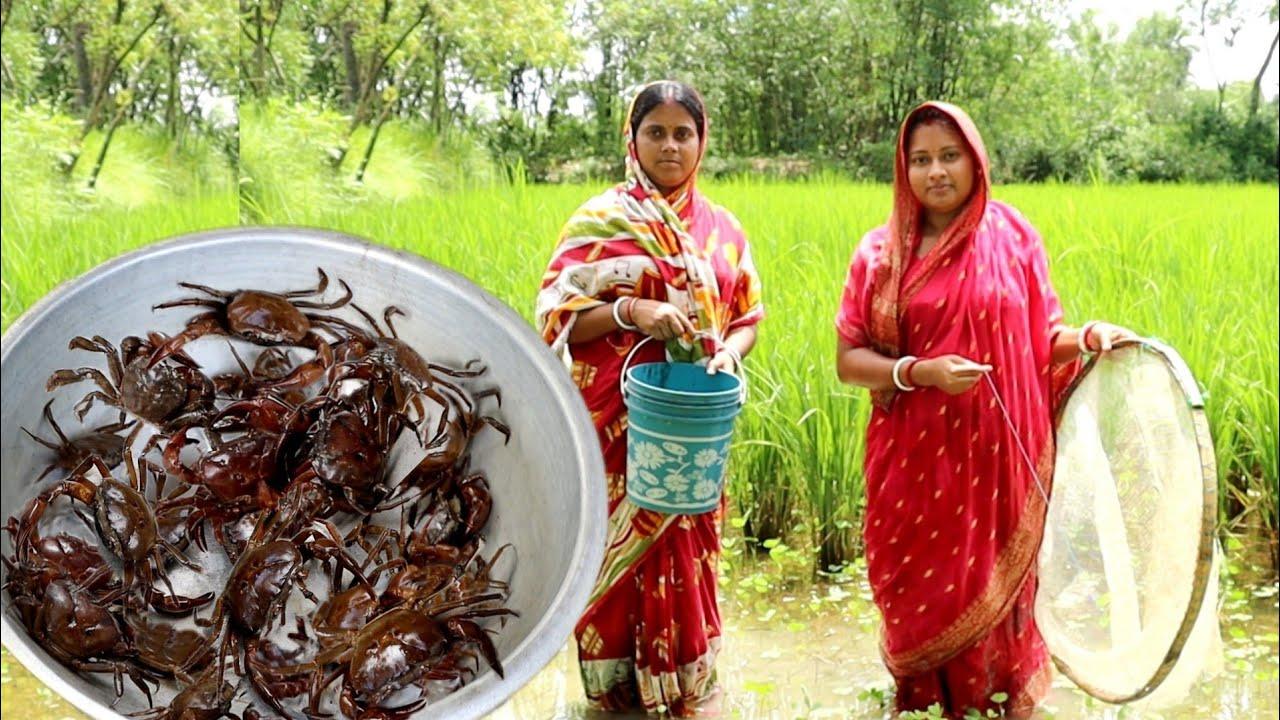 ধানক্ষেতের কাঁকড়া ধরে রান্না || crab hunting in field&cooking masala crab curry recipe||popi kitchen