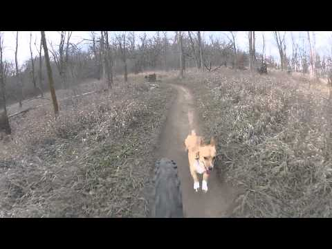 Corgi goes hard mountain biking