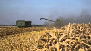 Pszenica -  jak się ustanawia record 16,5 tony/ha