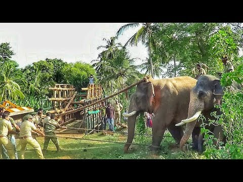 Capturing killer elephant that took the life of 7 people [Attappadi, Kerala]