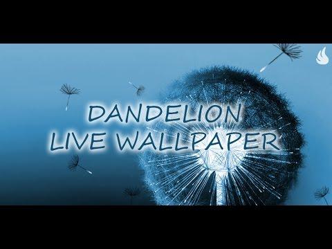 Dandelion Live Wallpaper - YouTube