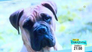ΤΡΕΛΗ ΟΙΚΟΓΕΝΕΙΑ - trailer επεισοδίου 31 (Σάββατο 6.2.2016), στις 21:00