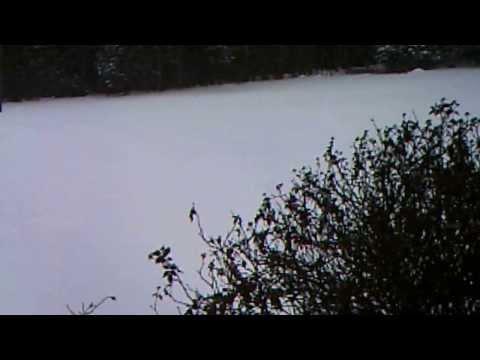 second storm on calhoun forest