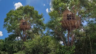 Build The Most Beautiful Tree bamboo villa in Deep Jungle