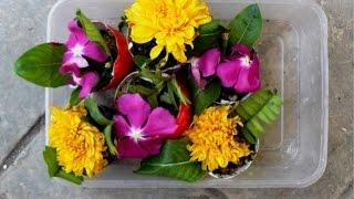 Make a Nice Eggshell Garden - DIY Home - Guidecentral
