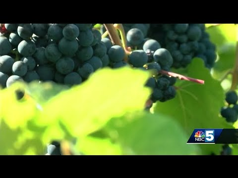Vermont wine vineyards draw people and profit