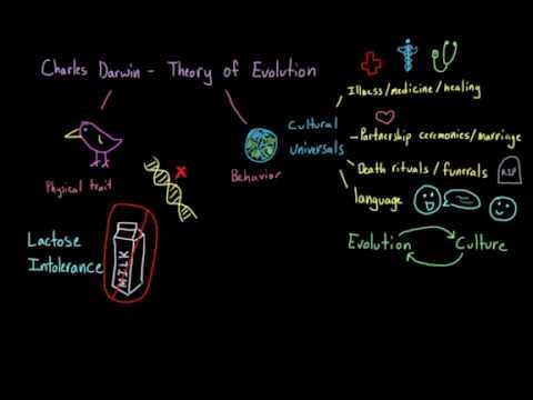 Introduction to Sociology: Evolution and human culture