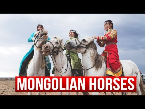 Mongolian horses and their riders - Matjoez in China #8