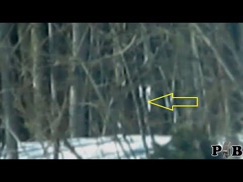 Sasquatch Walking Behind Trees?