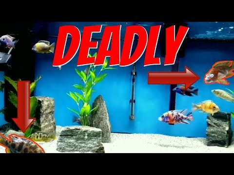 DEADLIEST DISEASE To Infect These Aquarium Fish