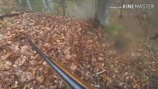 #14 Охота на кабана с Лайками на Кавказе #охота #кабан #кавказ