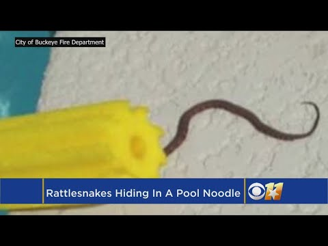 Theresa - WARNING: Throw Your Pool Noodle Away, It's a Snake Hiding Place