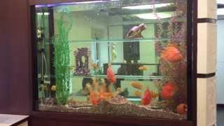Аквариум в стенке(via YouTube Capture., 2013-09-05T15:29:32.000Z)
