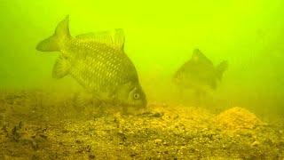 Закормил лунку опустил камеру и офигел Зимняя рыбалка на лесном озере