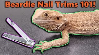 How to Trim your Bearded Dragon's Nails!