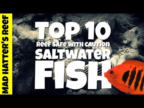 Top 10 Not So Reef Safe Saltwater Fish