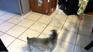 Miniature Schnauzer Vs. Bubbles