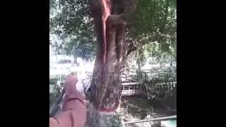 Koborer Ajab Dekhun