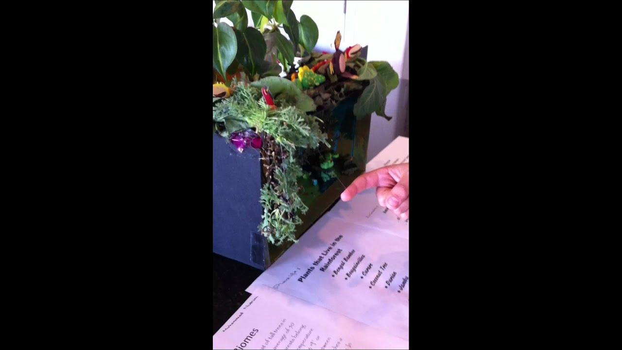 Rainforest Biome Shoebox Project Grade 5