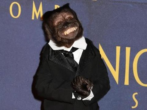 Monkey Steals the  at 'Museum 3' Premiere