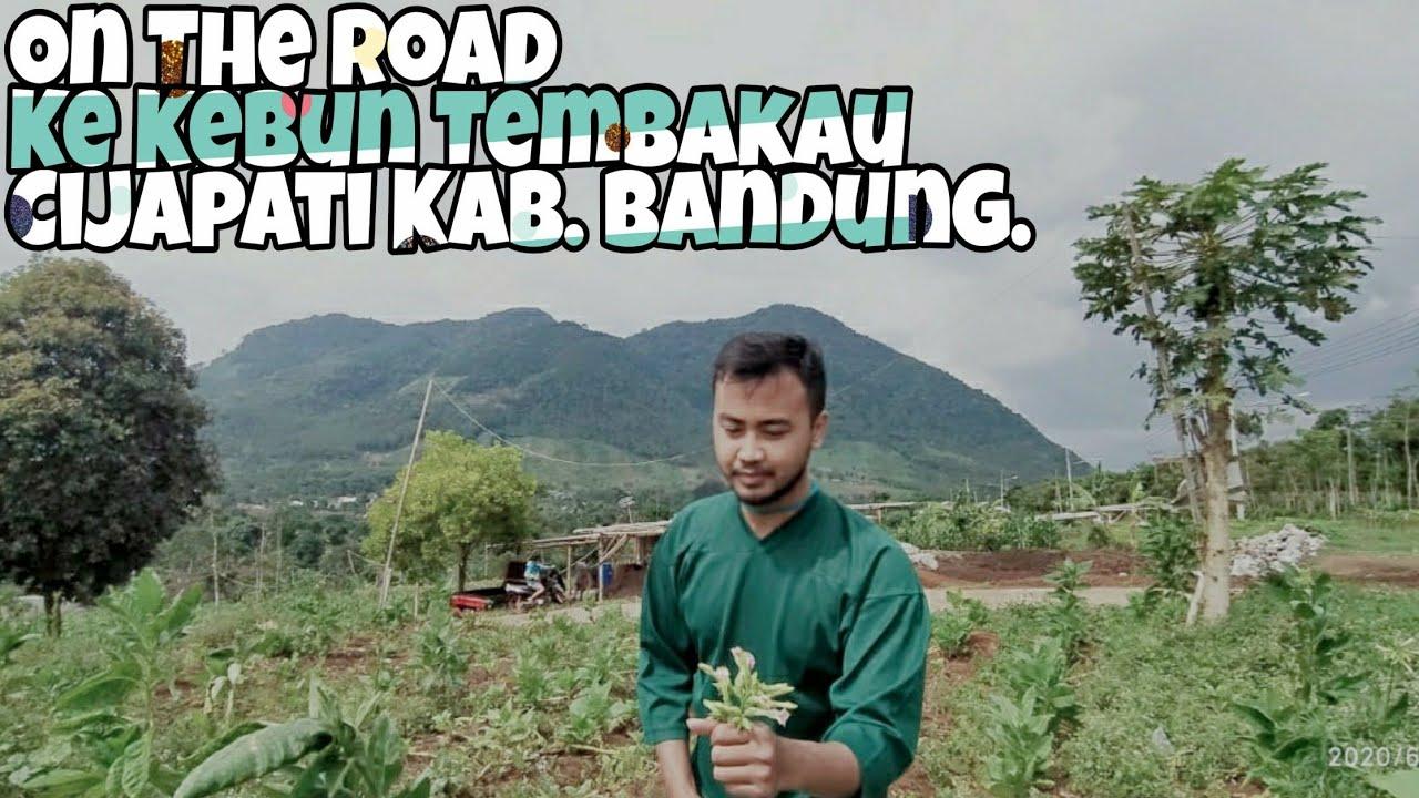 On the road ke kebun/petani tembakau cijapati Kab. Bandung