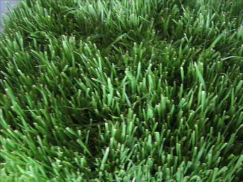 Grass Photography in 70 seconds