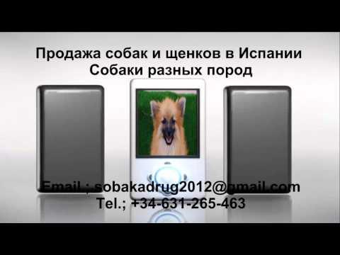 Продажа собак и щенков в Испании
