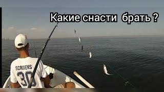 Ловля ставриды на Черном море На что ловить и когда