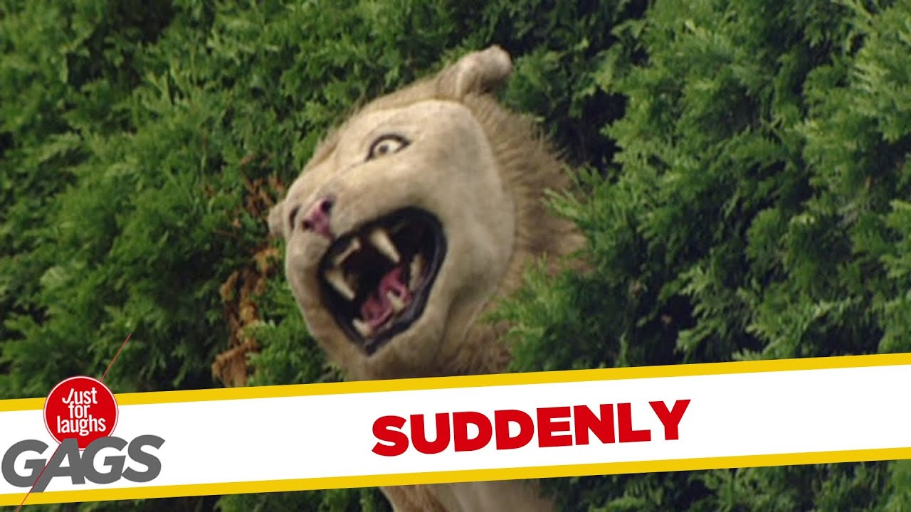 Lion out of nowhere