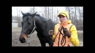 Как создать связь с лошадью, Урок 2